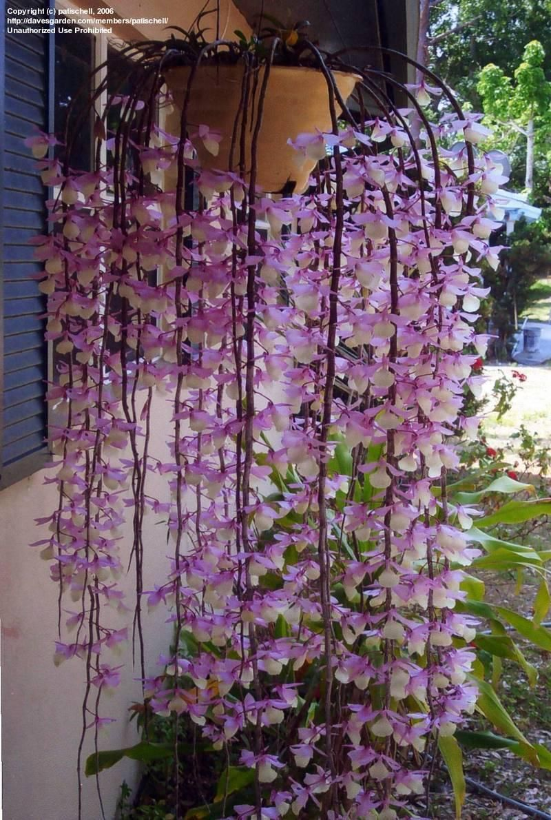 Orchid Mean Would What An After It Be Even To