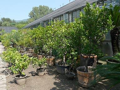 Countries Tree Massage Parlors Lemon Beijing