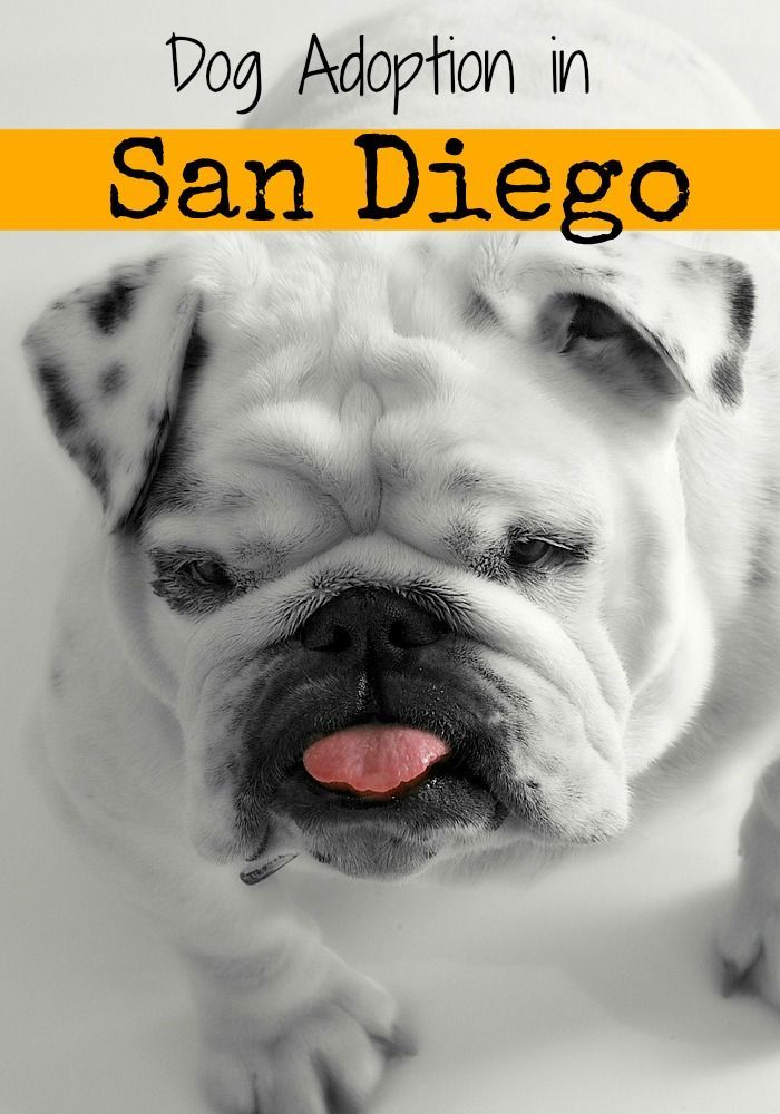 Rehoboth San Friend For Diego A With Benifits Looking